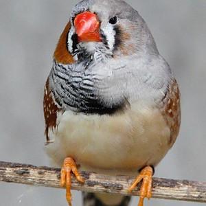 Gilbert BUNN's Bird