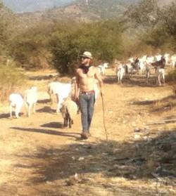 Goat Farm, Central Chile