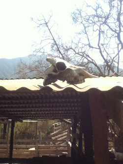 Central Chile Goat Farm