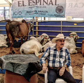 Annual Guadalajara livestock fair a fecund onslaught for the senses