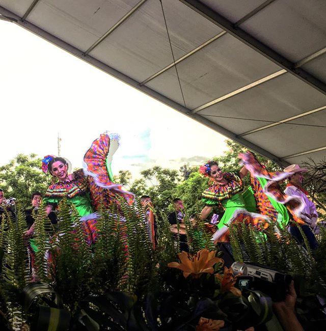 Mariachi festival, Centro Historico