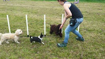 Social dog walkng adventures, dog mentl and physical stimulation.