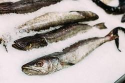 Fresh fish merluza or hake
