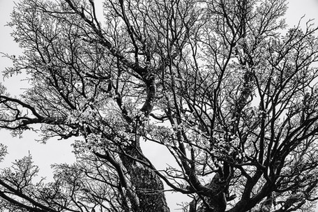 florestapatagonia-elciojr-28.jpg