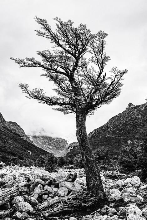 florestapatagonia-elciojr-25.jpg
