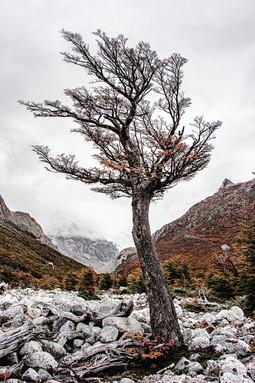 florestapatagonia-elciojr-24.jpg