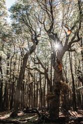 florestapatagonia-elciojr-20.jpg