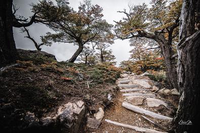 florestapatagonia-elciojr-5.jpg