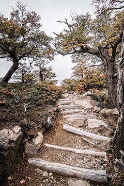 florestapatagonia-elciojr-4.jpg