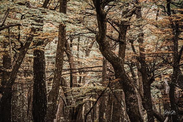 florestapatagonia-elciojr-9.jpg