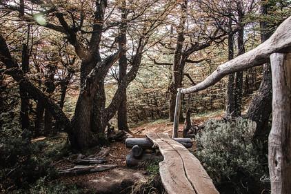 florestapatagonia-elciojr-32.jpg