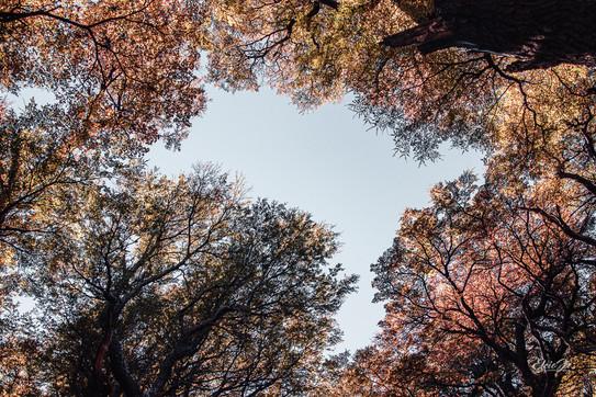 florestapatagonia-elciojr-18.jpg