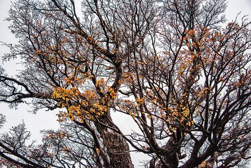 florestapatagonia-elciojr-27.jpg