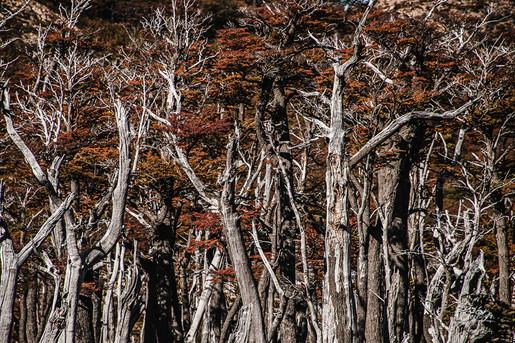 florestapatagonia-elciojr-22.jpg