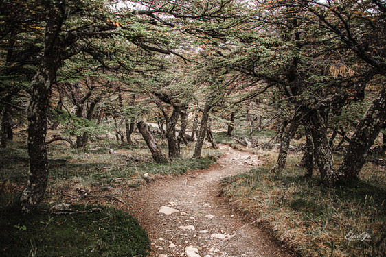 florestapatagonia-elciojr-13.jpg