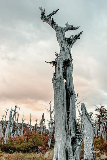 florestapatagonia-elciojr-16.jpg