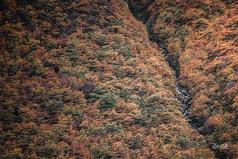 florestapatagonia-elciojr-10.jpg