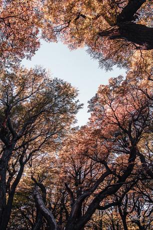 florestapatagonia-elciojr-19.jpg