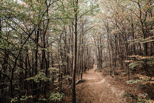 florestapatagonia-elciojr-31.jpg