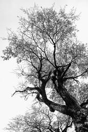florestapatagonia-elciojr-14.jpg