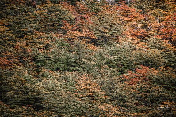 florestapatagonia-elciojr-3.jpg