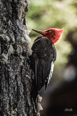 florestapatagonia-elciojr-39.jpg