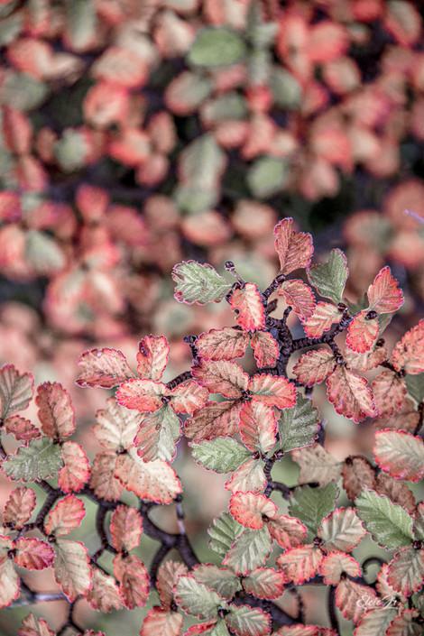 florestapatagonia-elciojr-29.jpg