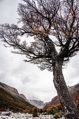 florestapatagonia-elciojr-26.jpg