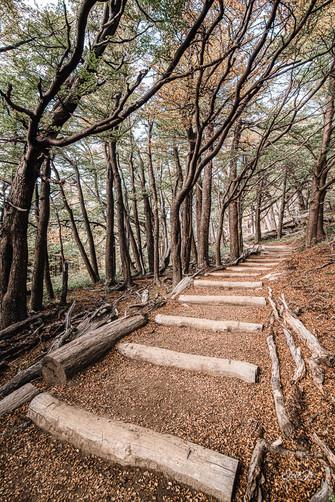 florestapatagonia-elciojr-30.jpg