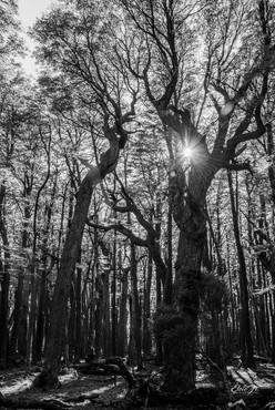 florestapatagonia-elciojr-21.jpg