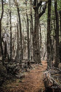 florestapatagonia-elciojr-15.jpg