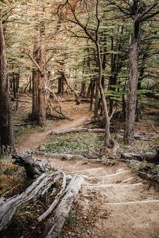 florestapatagonia-elciojr-8.jpg