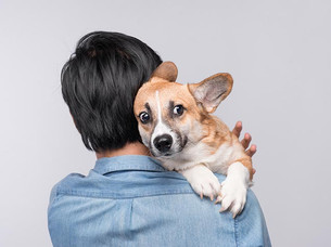 Desensitizing your dog to loud sounds