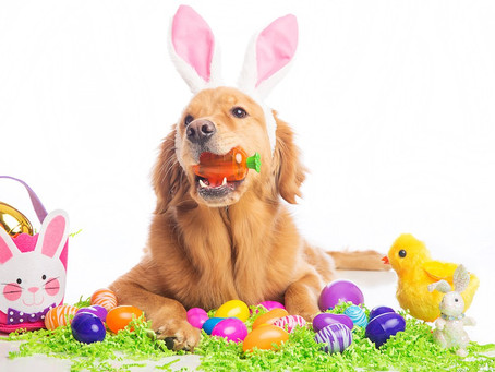 Dog Dangers with Easter!