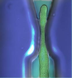 Microgap color v1