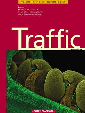 Traffic 2011.jpg
