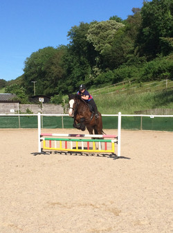 Lilly - 16.2hh