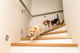 TEN EVERYDAY ACTIVITIES THAT CAN DAMAGE YOUR DOG – PART 2©