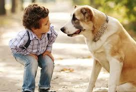 Canine Rehabilitation Canberra & Covid-19 Information:
