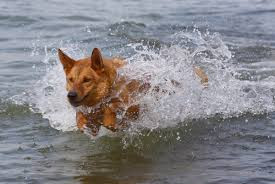 Have You Considered Cross Training Your Dog?©