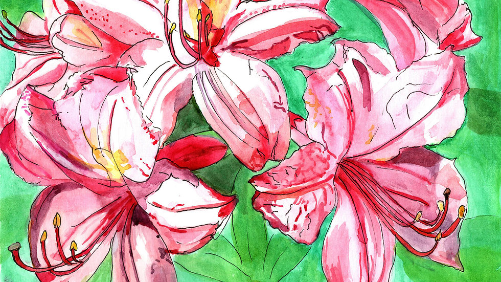 Azaleas Watercolour Greetings Card
