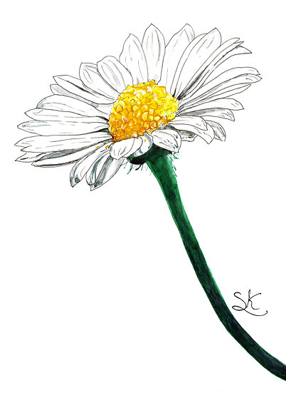 Daisy Watercolour