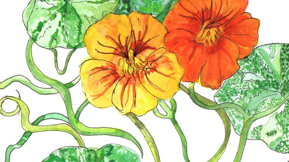 Nasturtiums Watercolour Greetings Card