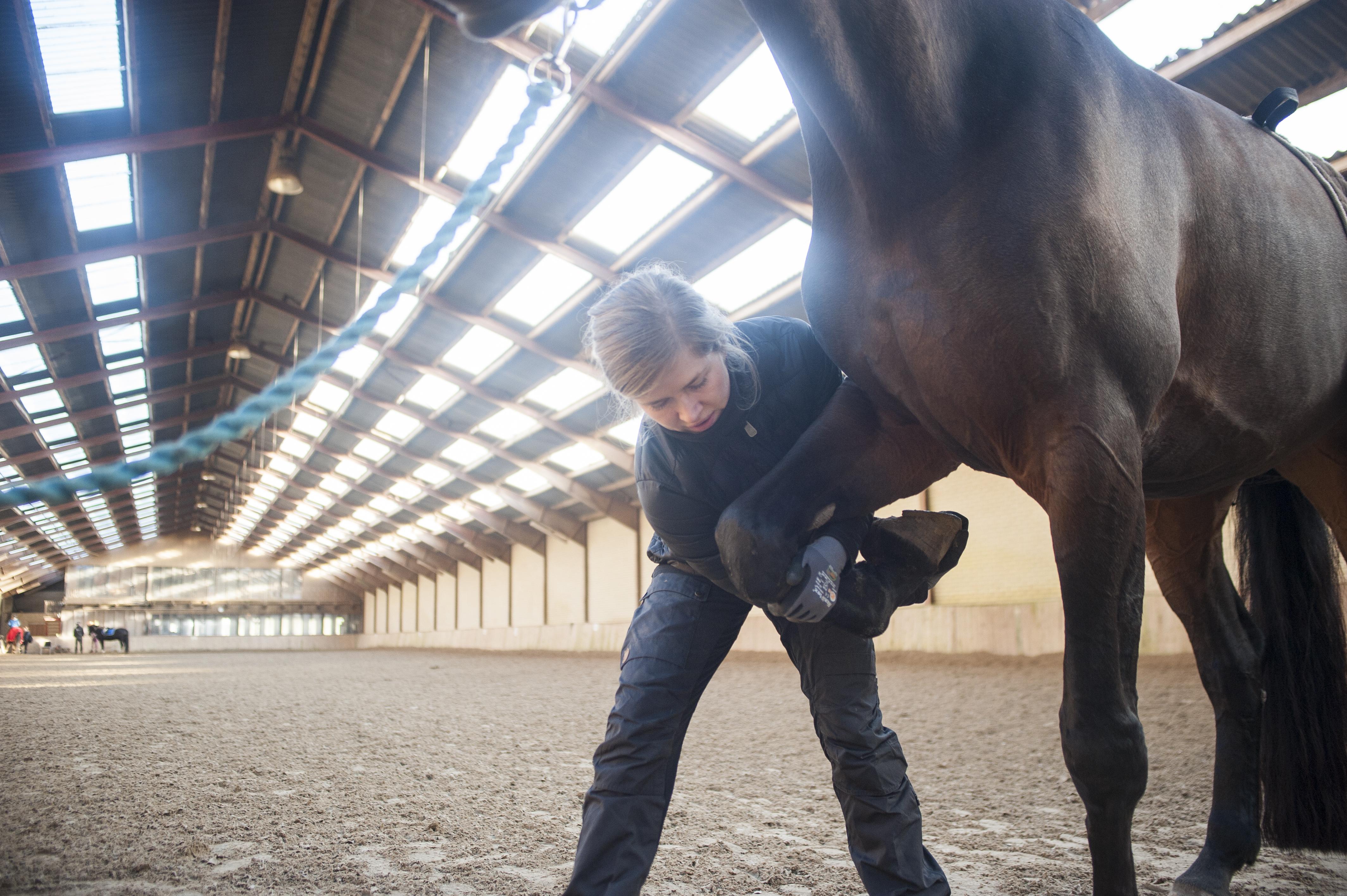 HestefysMarieBundgaard47