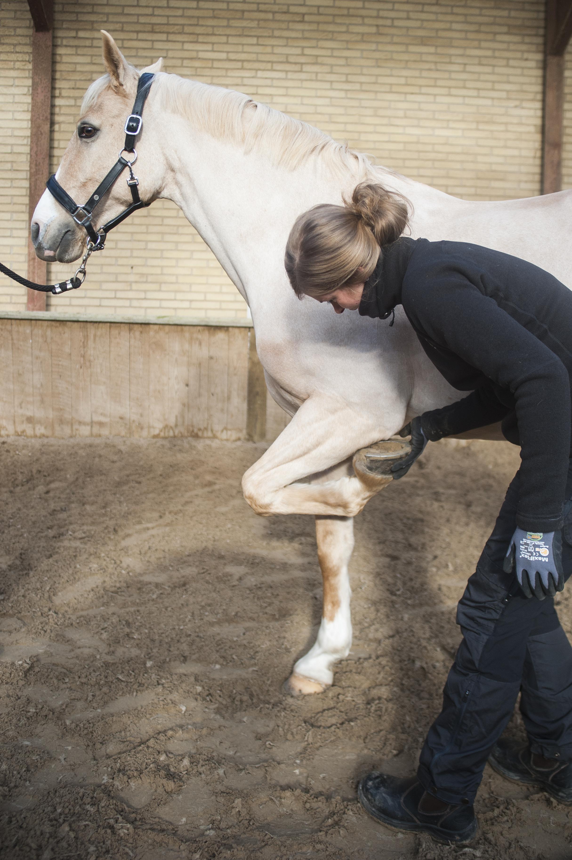 HestefysMarieBundgaard13