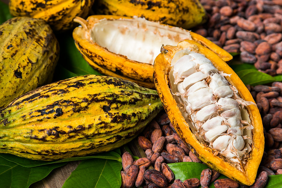 Cocoa beans and cocoa pod on a wooden su