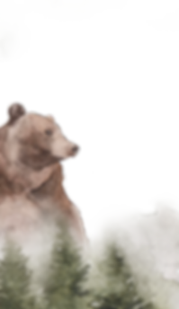Bear 4 web.png