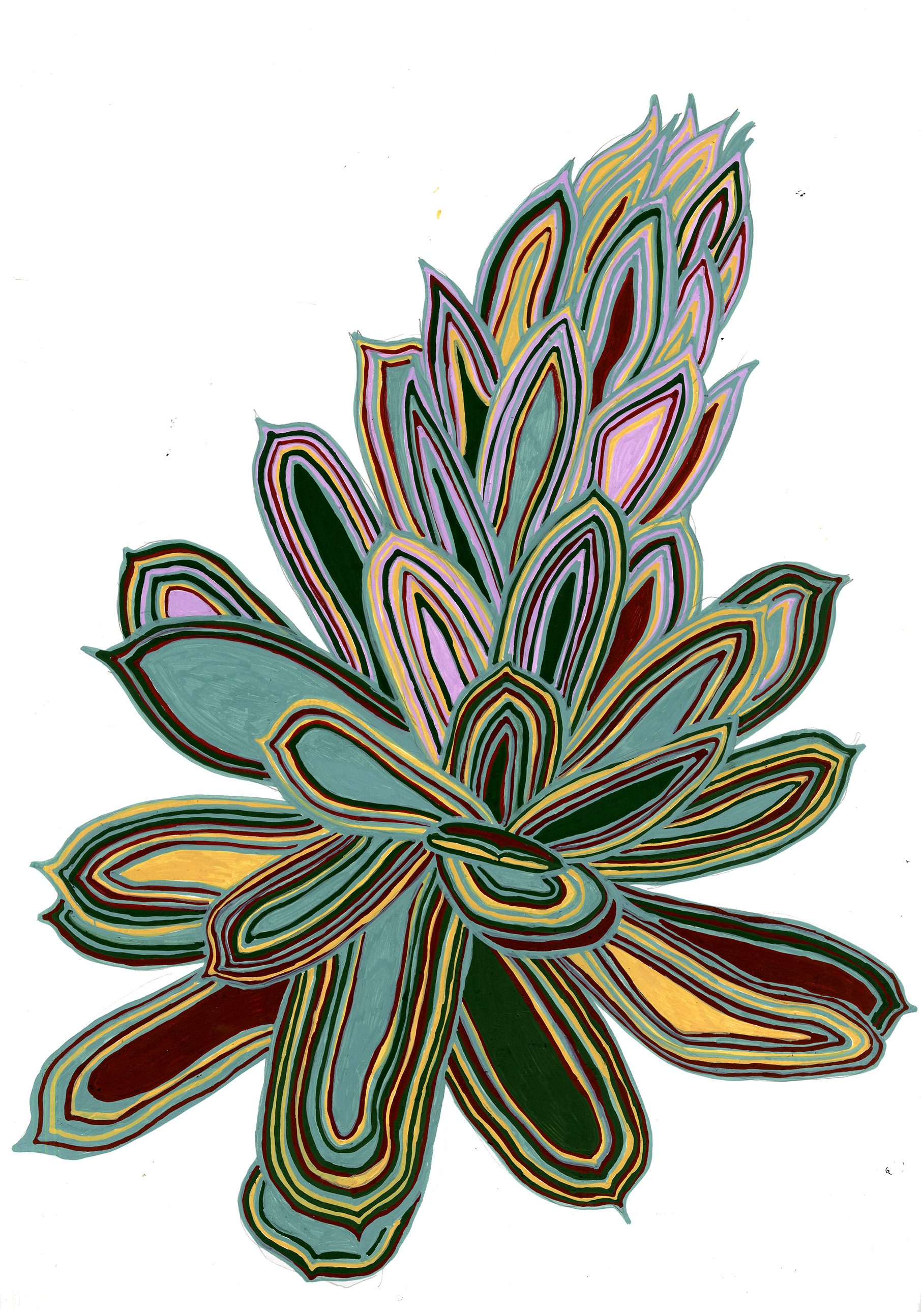 succulent for wix