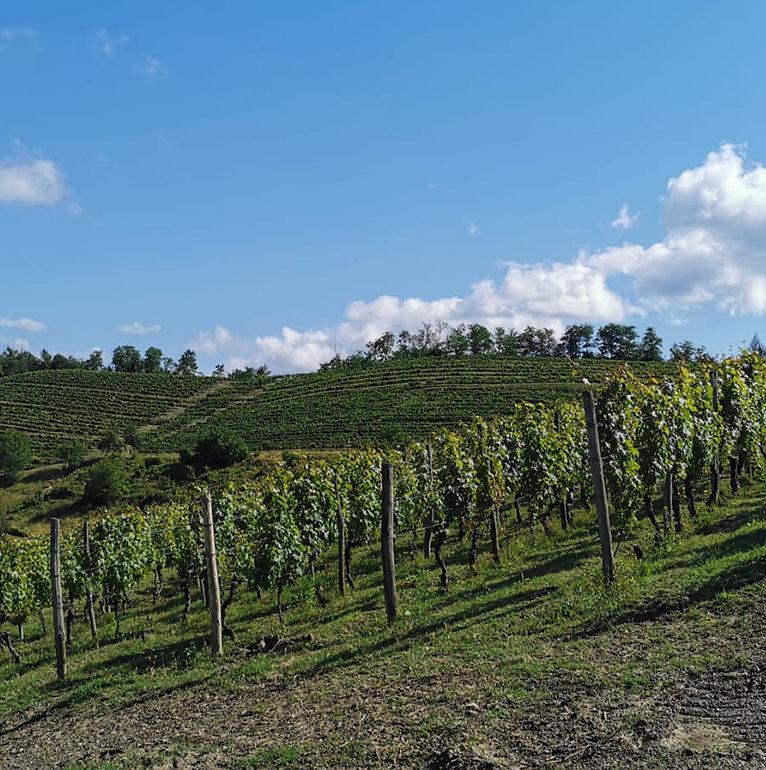 la casanella vigne  2 1000X1000.jpg