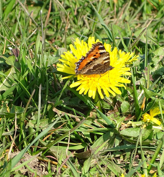 Butterfly%20and%20Dandelion_edited.jpg